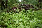 Camassia Natural Area