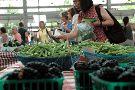 Chattanooga Market