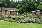 Chocolate Flower Farm