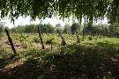 Diamond Hill Vineyards