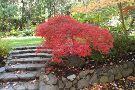 Dunsmuir Botanical Gardens