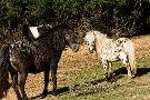 Franklin Drive Thru Safari