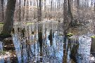 Great Swamp National Wildlife Refuge