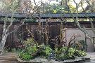 GSBF Bonsai Garden at Lake Merritt