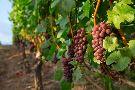 Hawks View Winery