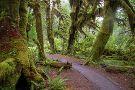Hoh River Trail