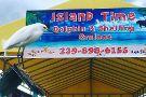 Island Time Dolphin & Shelling Cruises