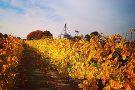 Layton's Chance Vineyard and Winery
