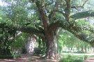 Melrose Plantation
