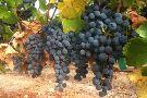 Mercury Wine