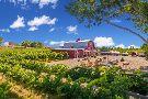 Mesa Park Vineyards