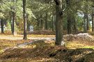 Moore's Creek National Battlefield