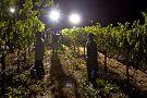 Naggiar Vineyard & Winery