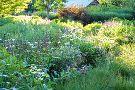 Northwind Perennial Farm