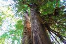 Redwood Adventures