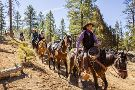 Ruby's Horseback Adventures