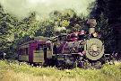Skunk Train