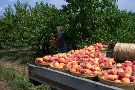 Soons Orchards & Farm Market