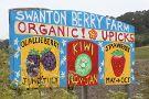 Swanton Berry Farm