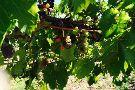 Ten Spoon Vineyard and Winery