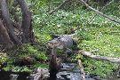 The Gators Nest