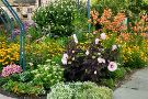The Monet Garden of Muskegon
