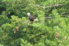 The Wildlife Center at Sinnemahoning State Park