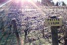 Toogood Estate Winery