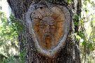Tree Spirits of St. Simons Island