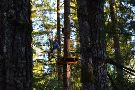 Tree to Tree Adventure Park