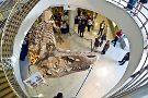University of California Museum of Paleontology