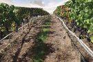 Volcano Winery