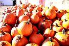 Waldvogel's Pumpkin Farm