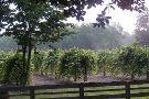 Watermelon Creek Vineyard