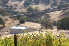 Wine Tree Farm & Corinne Wines