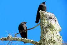 Acadia's Birds, Acadia National Park, United States