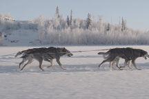 Alaska Mushing School