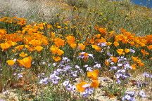 Antelope Valley California Poppy Reserve, Lancaster, United States