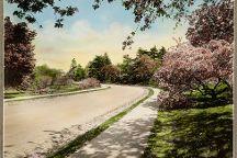 Arnold Arboretum, Boston, United States