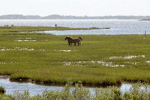 Assateague Island National Seashore, Assateague Island, United States