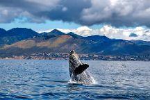 Avila Beach Whale Watching