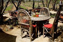 Baja Winery Tours