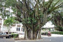 Banyan Drive, Island of Hawaii, United States