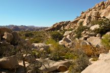 Barker Dam Trail, Joshua Tree National Park, United States