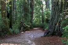 Big Basin Redwoods State Park, Boulder Creek, United States