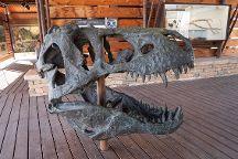 Big Bend National Park - Fossil Bone Exhibit, Big Bend National Park, United States