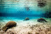 Bird's Underwater