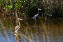 Black Point Wildlife Drive, Merritt Island, United States