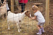 Blase Family Farm, Rockwall, United States
