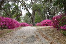 Bonaventure Cemetery Tours, Savannah, United States